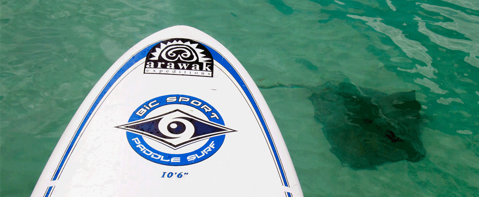 Paddleboard Rental and Instruction