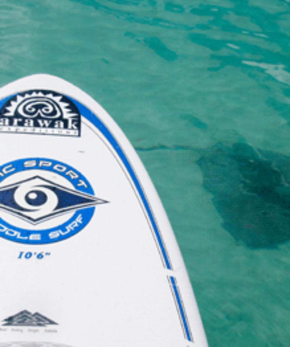 paddleboard_stingray