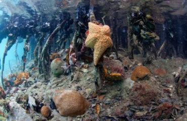 Star Fish - Otter Creek Hurricane Hole